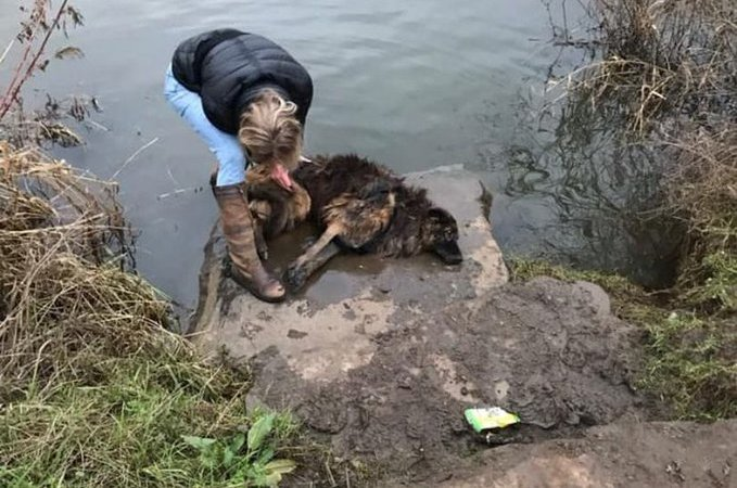 People Try To Save A Dog Someone Tried To Drown By Tying The Leash To A Rock.