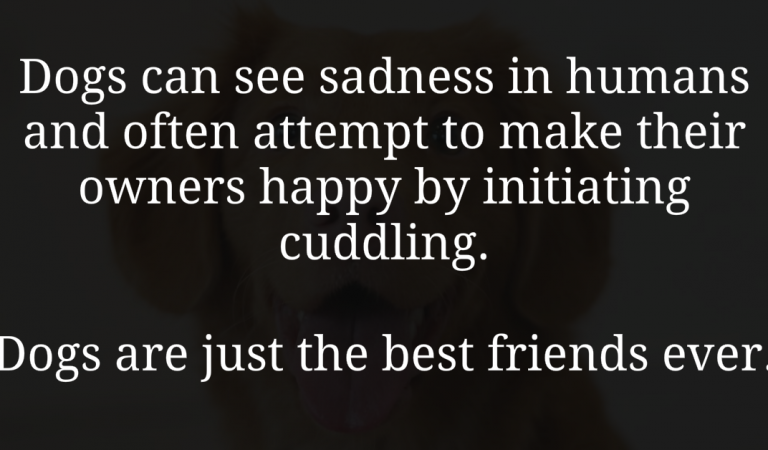 Dogs just make your life happier by being your best friend