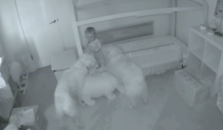 Dogs wake up their toddler friend in the morning, so she can give them treats.