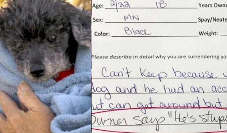 Vet refuses to Put down an 18-year-old dog. Instead, he did something else